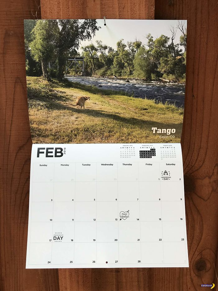 Календарь с какающими собаками