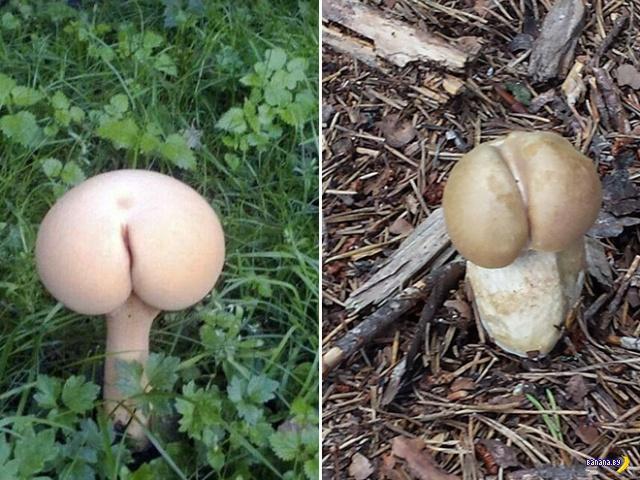 Попы и грибы –какая связь?