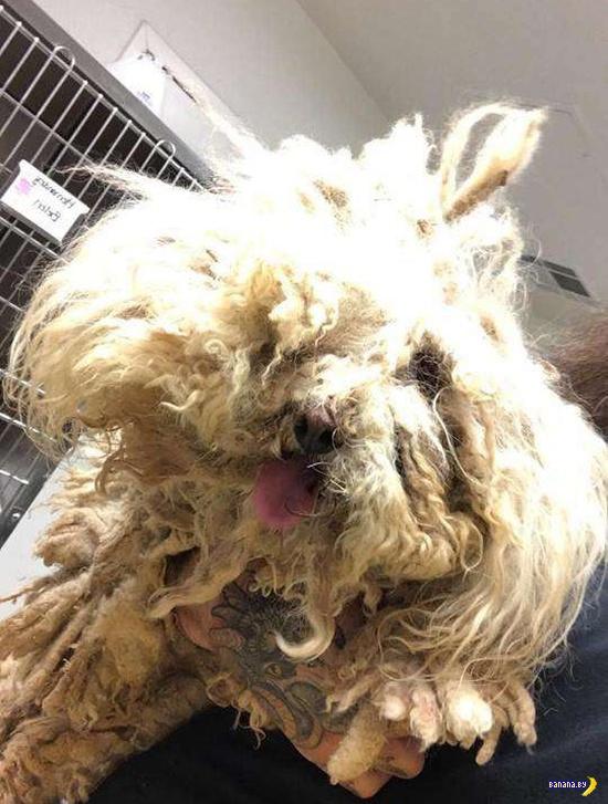 В комке шерсти обнаружен живой пёс!