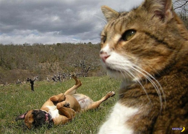 Коты делают селфи. Снова! 🐱