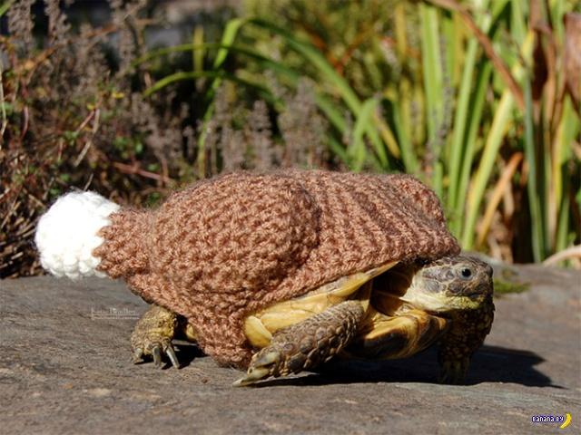 Мода для черепах –коллекция осень/зима 2018