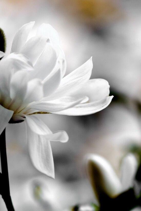 Россыпь красивых фотографий - 239