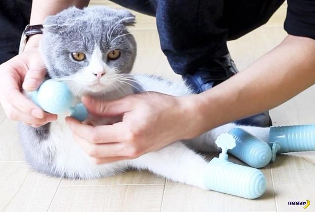 Китайский аксессуар для котика