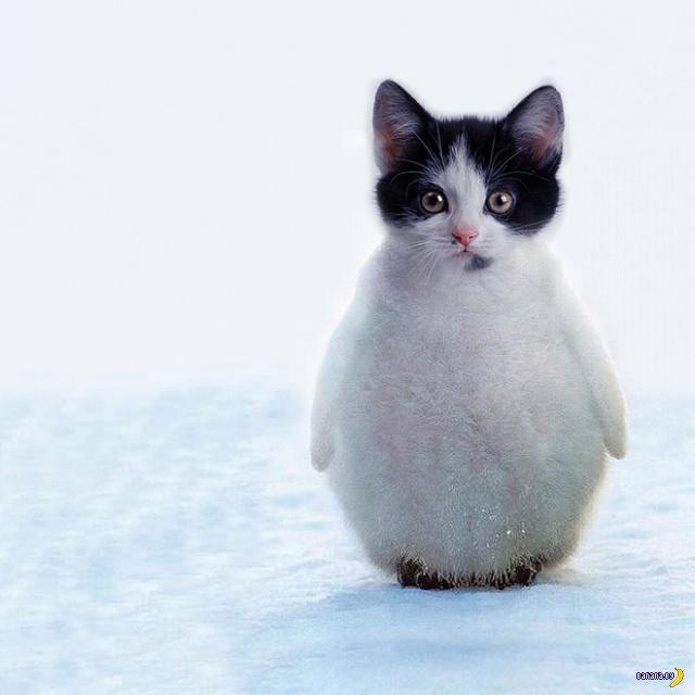 Коты и Фотошоп