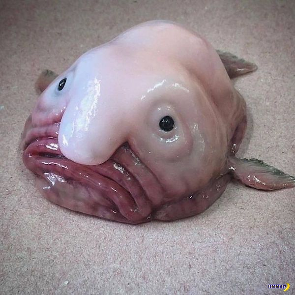 Кошмарный улов из северных морей