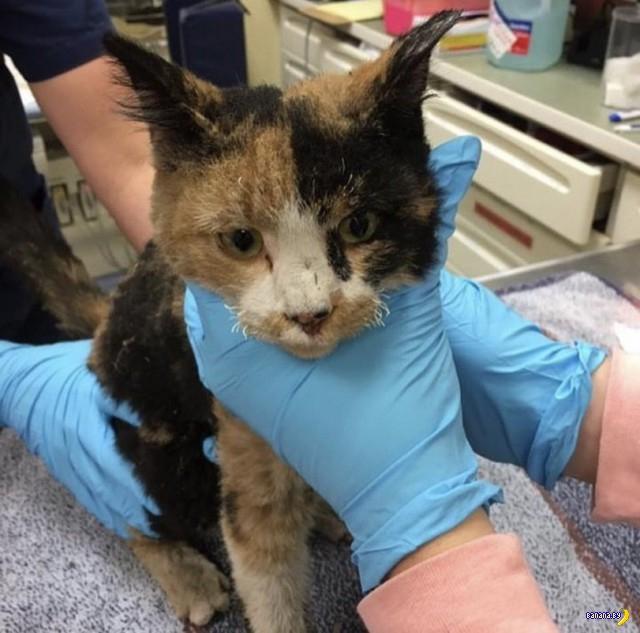 Пережившие пожар в Калифорнии коты и собаки