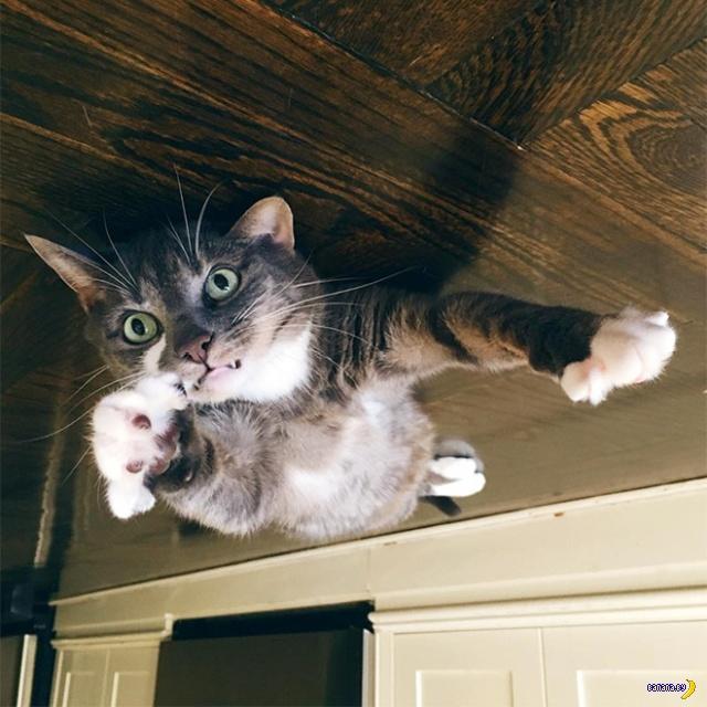 Коты и антигравитация