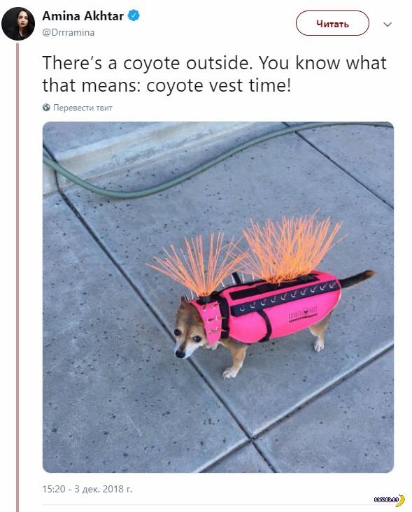 Это не BDSM собаки!