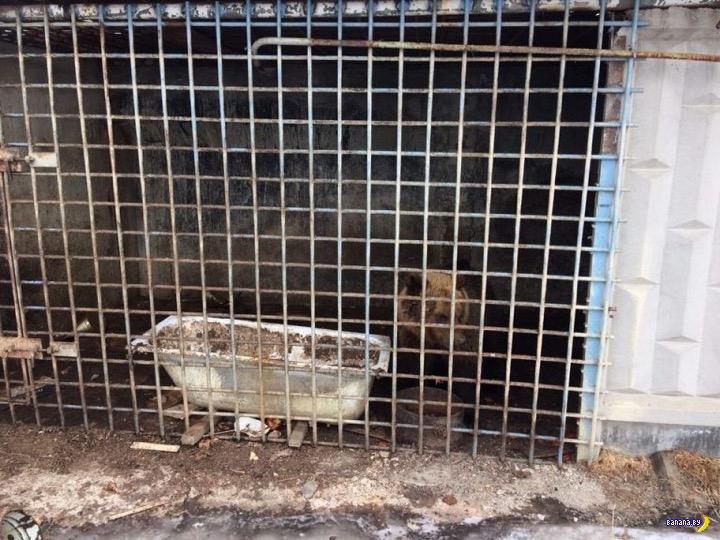 Домашний медведь убил и съел своего хозяина