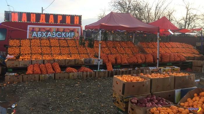 Абхазия, мандарины