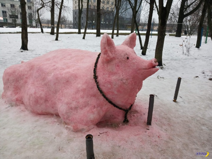 Минская снежная свинья
