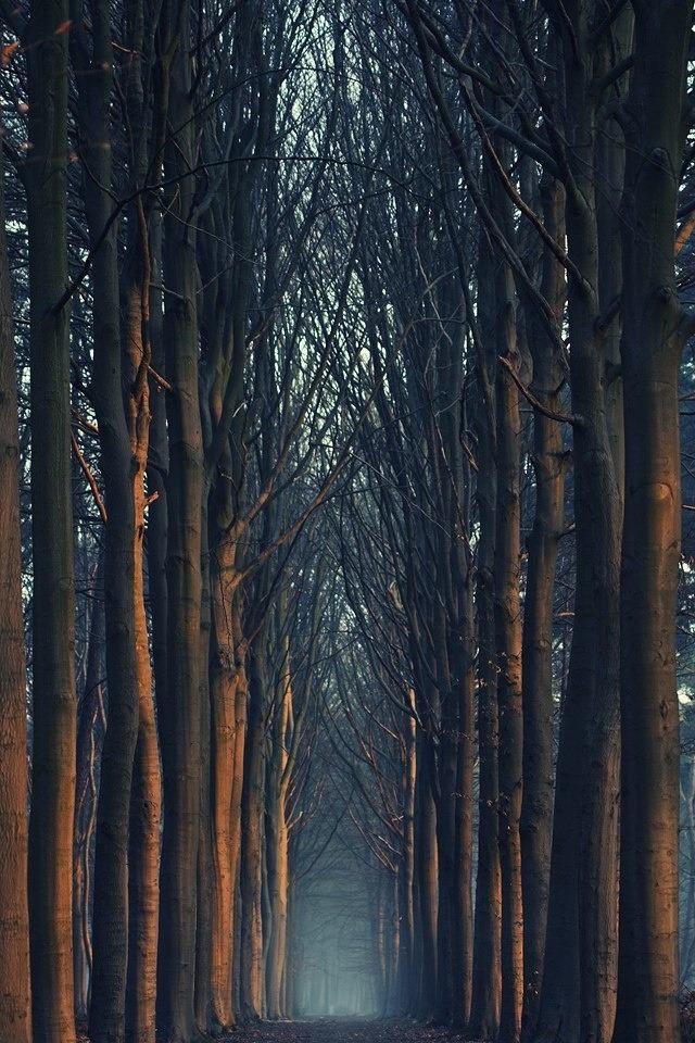 Россыпь красивых фотографий - 245
