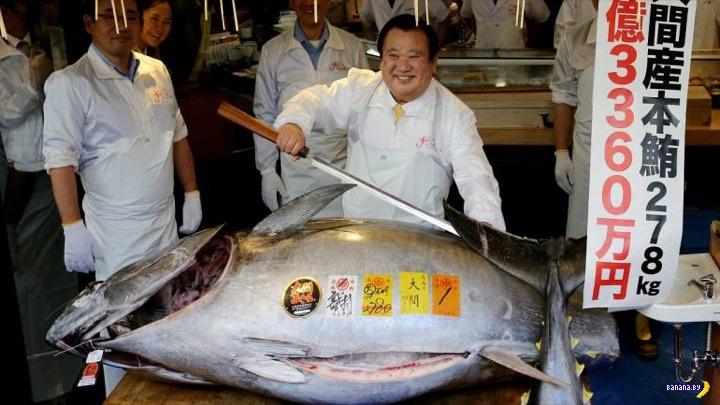Рекордный тунец продан за $3,1 млн