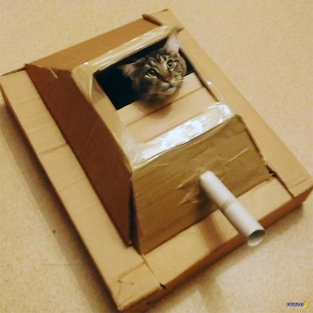 Коты в картонных танках