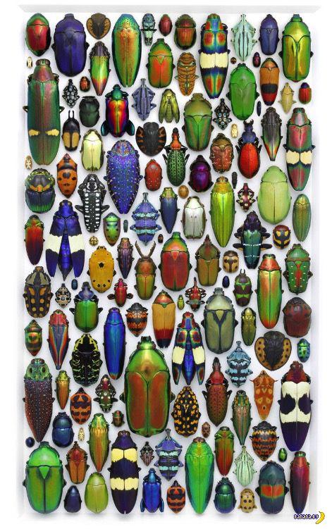 Композиции из бабочек и жуков