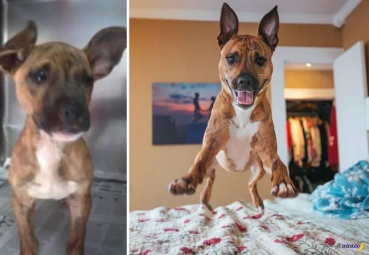 Собаки и коты: в приюте и дома!
