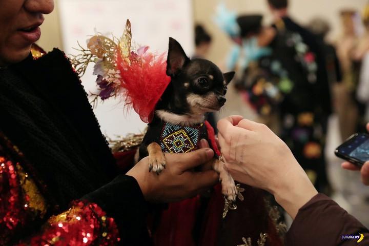 New York Pet Fashion Show 2019