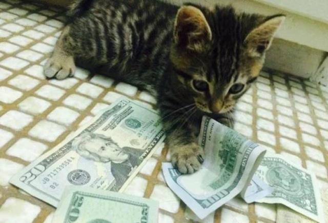 Коты и деньги