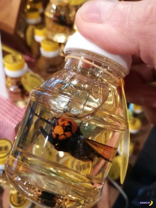 Банка мёда, шершень –бесплатно!