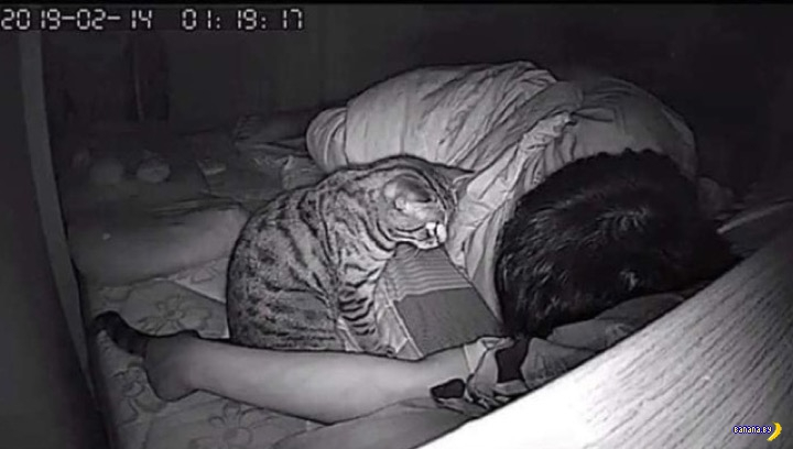 Кот на посту
