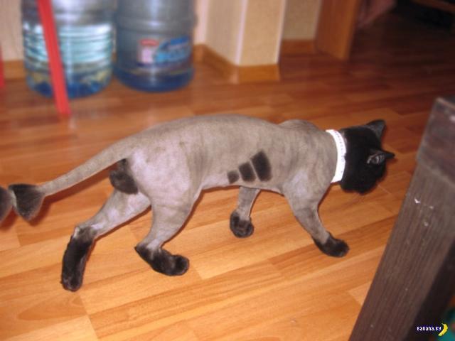 Коты и экстремальный груминг