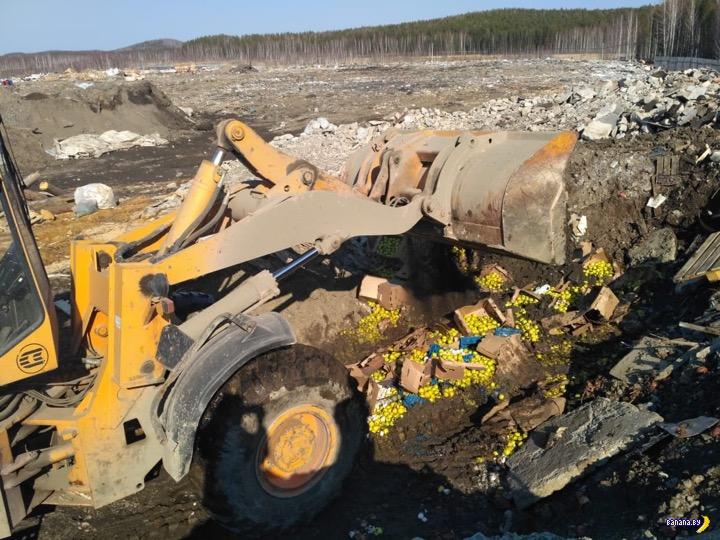 Россия объявила новую войну яблокам из Беларуси