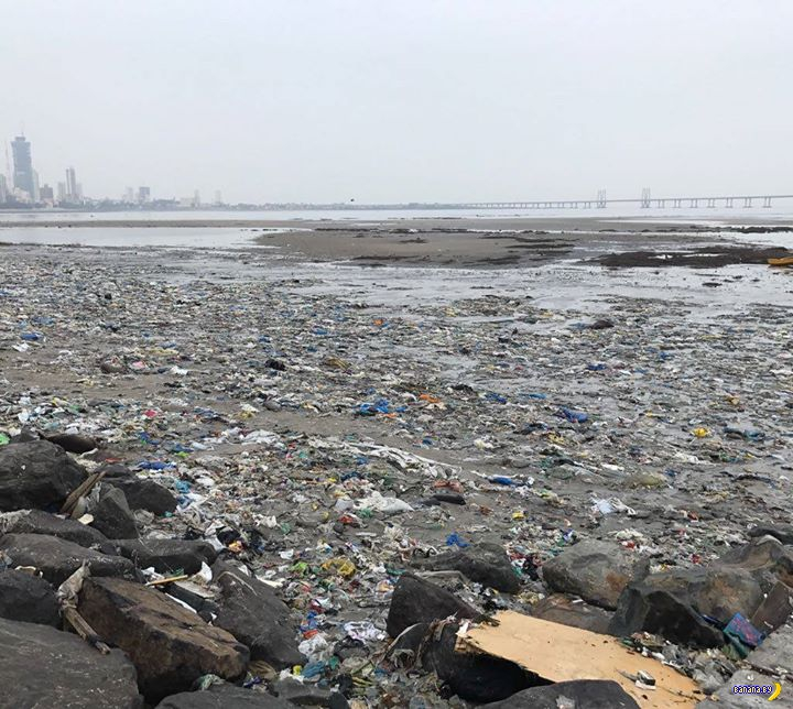 Очистка пляжа Махим Бич в Мумбае