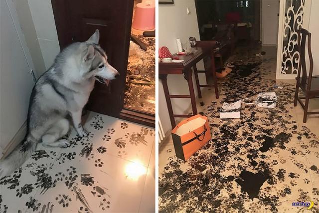 Хвостатые домашние вандалы