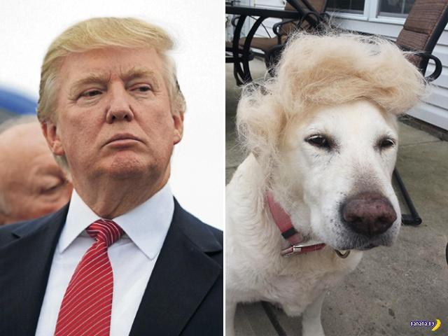 Всё, что похоже на Дональда Трампа