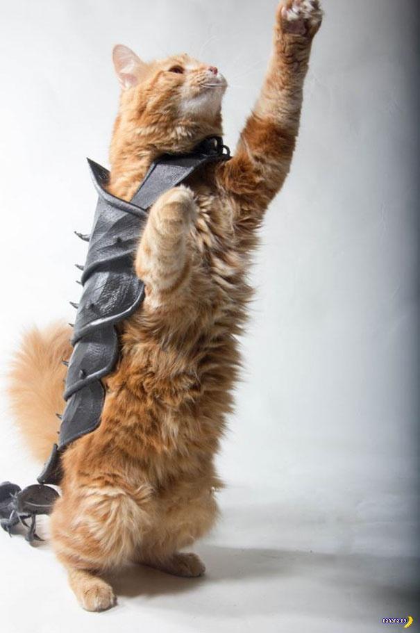 Доспехи для кота своими руками