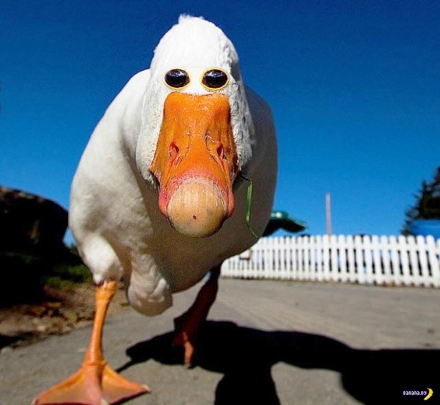 Стоит животным и птицам перенести глаза...