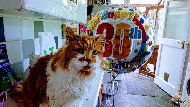30-летний кот