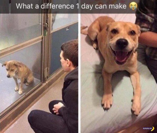 Коты и собаки, которые оказались нужны