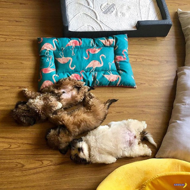 Странная манера спать на спине