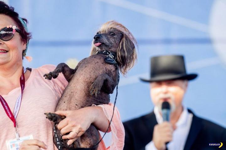 Выбрана самая уродливая собака 2019 года!