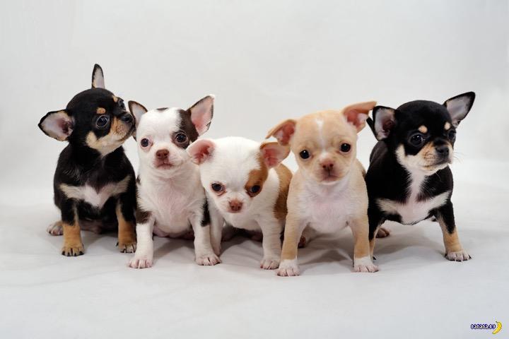 На продаже несуществующих щенков заработать сложно