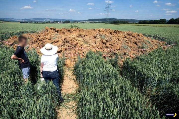 Эхо войны в кукурузном поле