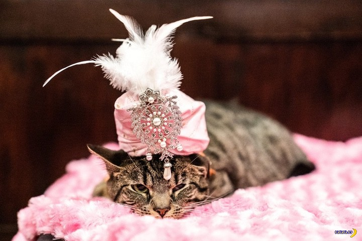 New York Cat Fashion Show 2019