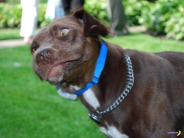 Собаки-чихаки