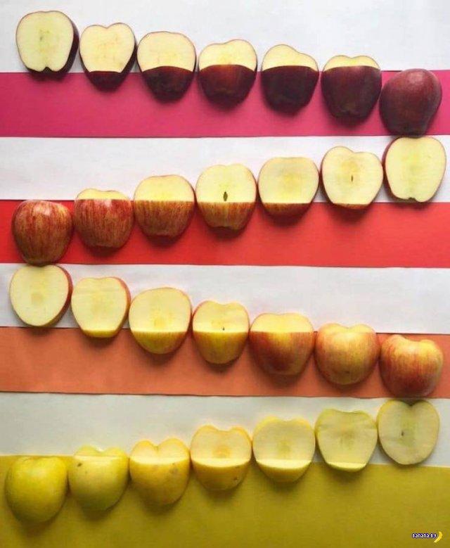 Игры с цветной едой