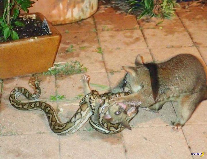 Лучшие фотографии из телефона австралийского змеелова
