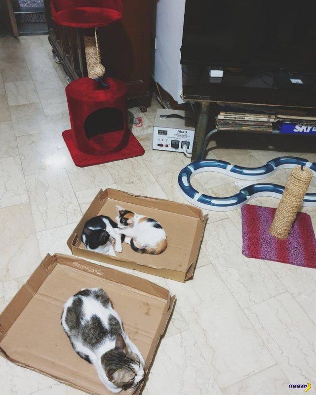 Классные котейки!