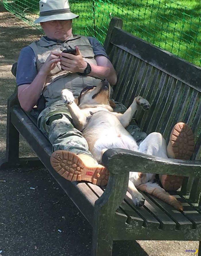Странные собачьи позы для сна