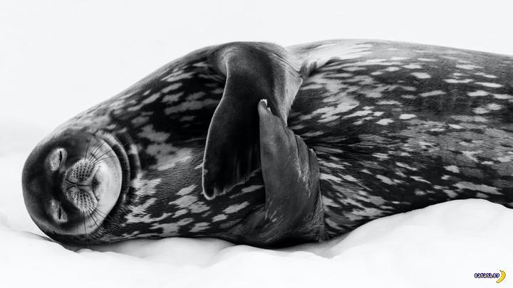 Победители конкурса Wildlife Photographer of the Year 2019