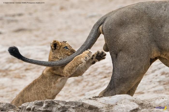 Финалисты Comedy Wildlife Photography Awards 2019