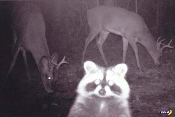 Жуткие фотографии животных