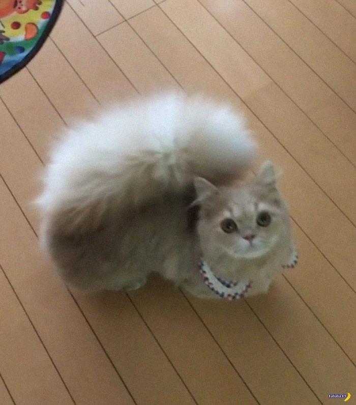 Это кот или белка?