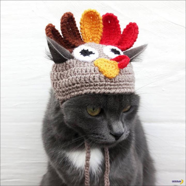 Коты и собаки в шапочках