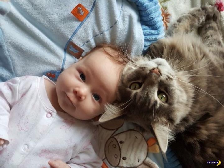 Кот убил младенца
