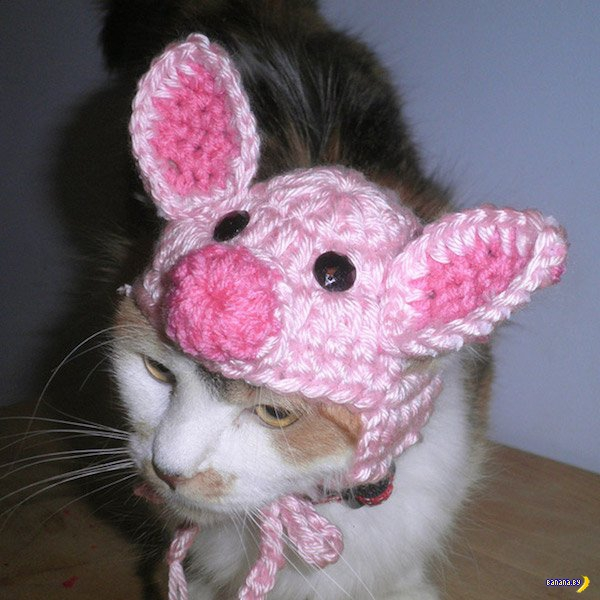 Коты и собаки в шапочках - 2
